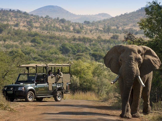 Kruger National Park - Half day Safari(5 - 6 hours Off site)